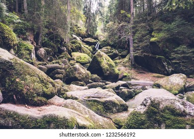 The black forest , a dense forest in south germany which provides tons of hiking paths