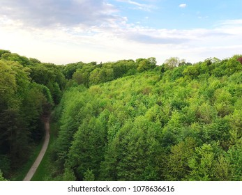 The black forest, fresh green tree