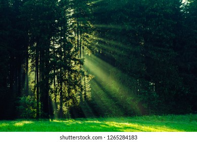 Black Forest in Germany. Morning sun shines through the golden foggy woods. Magical summer morning time. Romantic background. Sunrays before sunrise. Dreamy travel background.