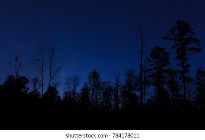 Black forest silhouetted by stars and a blue sky