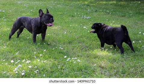 Pug Life Cute Dog Pet Animal Funny Family Womens Black Sweatshirt