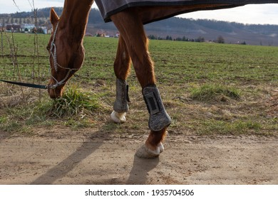 Black front leg protectors for horses strung on a brown horse standing on a dirt road.
