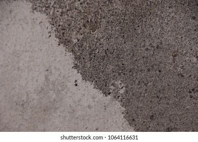 Black fungus Alternaria on the wall