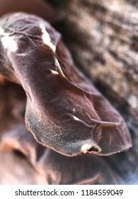 Black fungus. Ear fungus.Chinese black fungus.