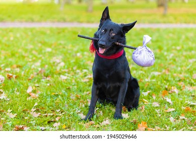 Black German shepherd dog traveler abandoned, left alone on road, street, park with stick in teeth, in mouth, with luggage bag or suitcase, plaintive look, begging to come home to owner. pet adoption