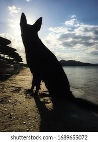 Black German Shepherd sitting at the beach