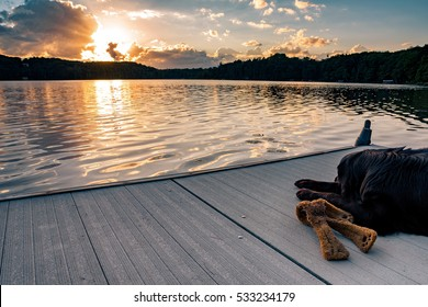 A black golden retriever and Newfoundland mixed-breed dog laying on a dock with his stuffed toy watching the sunset over a northern Wisconsin lake.