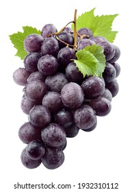 Black grape isolate. Black grape with leaves on white background. Blue grapes isolated on white. Clipping path. Full depth of field.
