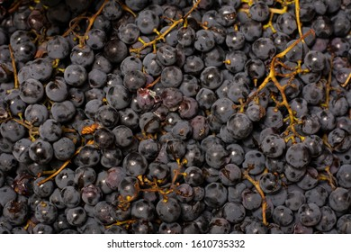 "Black grapes ""Isabella"", close-up photo."
