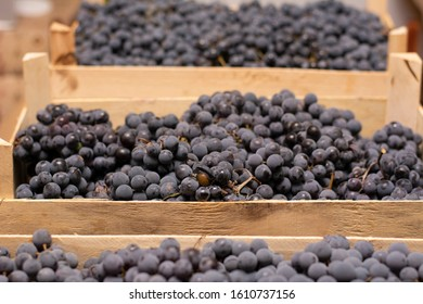 "Black grapes ""Isabella"" in wooden boxes, close-up photo."