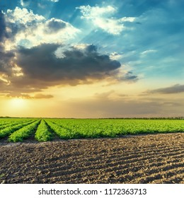 black and green agriculture fields and  orange sunset in blue sky with clouds