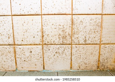 Black and green mold growing on shower grouted joints tile and appear on the ceramic wall in bathroom corner