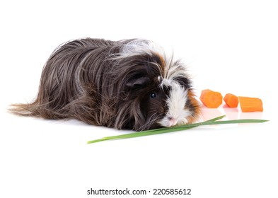 Black guinea pig eating carrot and grass on a white background