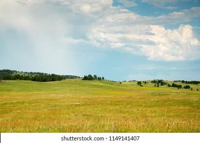 The Black Hills in Custer State Park in South Dakota.