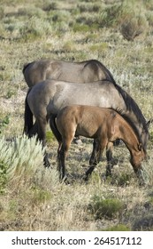 Black Hills Wild Horse Sanctuary, home to America's largest wild horse herd, Hot Springs, South Dakota