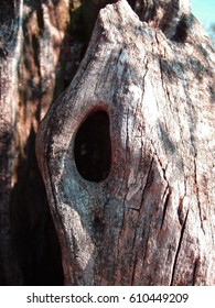 Black hole in a tree