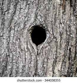 Black hole in tree trunk as entry to bird nest