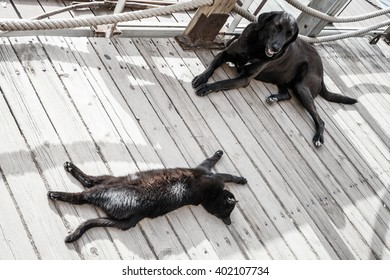 Black homeless cat and dog rest in the shadow on wooden floor