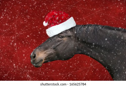 Black horse with christmas hat on red background snowfall
