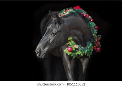 Black horse in christmas wreath. New Year and Christmas horse