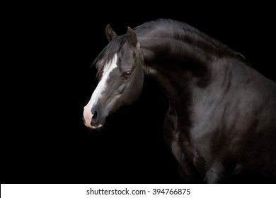 Black horse. Black horse isolated. Black horse on black background.