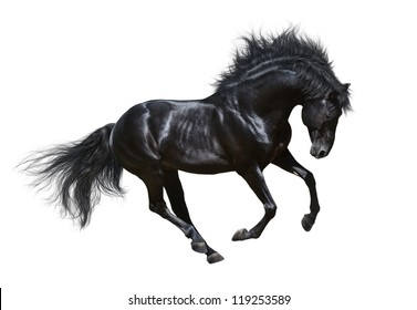 Black horse in motion - on white background.