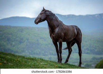 The black horse in the mountain