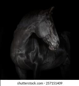 black horse on black