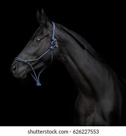 Black horse on black background isolated