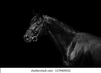 black horse on black background in low key