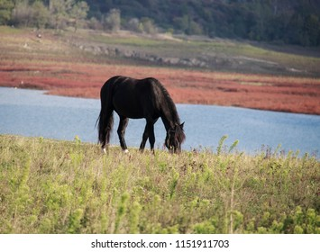 black horse on the pasture
