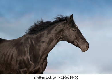 Black  horse portrait in motion against beautiful sky