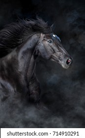 Black horse portrait in motion on black background with fog and dust