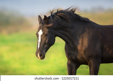 Black horse portrait in motion outdoor