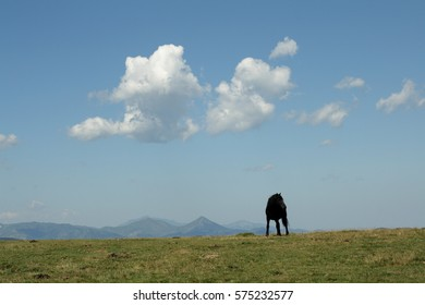 black horse in Pyreneres