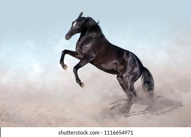 Black horse rearing up