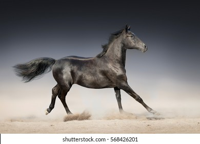 Black horse run in desert on dark background