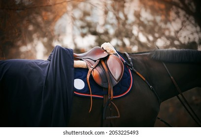 The black horse wears a leather saddle, stirrup, bridle, blue saddlecloth and a blue blanket on an autumn day. Equestrian sports and ammunition. Horse riding.