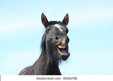 Black horse yawning on sky background