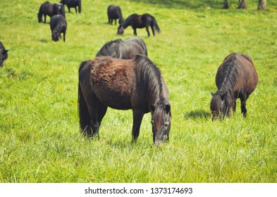 Black horses in a field in the mountain