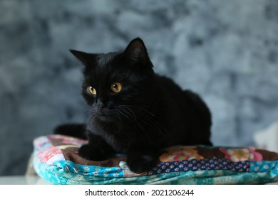black kat on the background of a textured wall