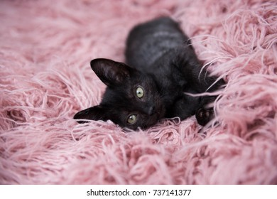 Black Kitten Laying on Pink Fluffy Blanket