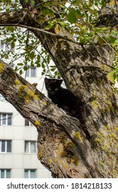 black kitten on a tree on the background of a residential building