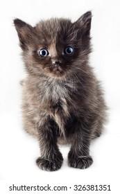 Black kitten on a white background