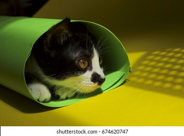 Black kitten playing with a green paper on yellow background. Black and white cat on yellow background. Black and white cat relaxing. Cute black kitten laying on yellow background. Cat portrait.