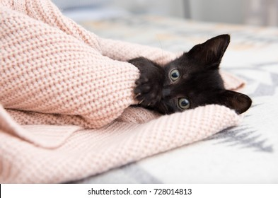 Black Kitten Playing with Pink Sweater