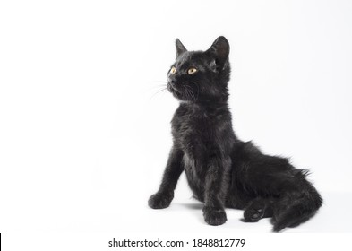black kitten sits waddle on a white background
