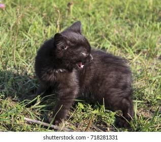 black kitten sitting in green grass