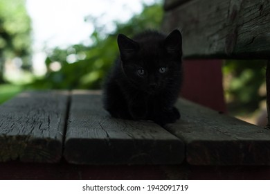 Black kitten sitting on a bench