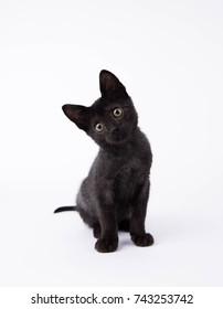 Black Kitten Sitting on White Background